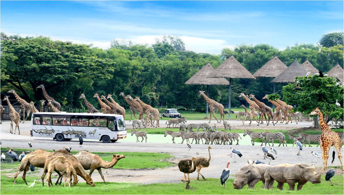 15-safari-world-with-marine-park-bangkok-tour